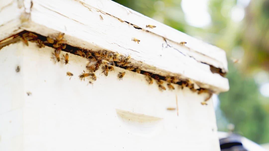דבורים בכוורת 2מקובץ